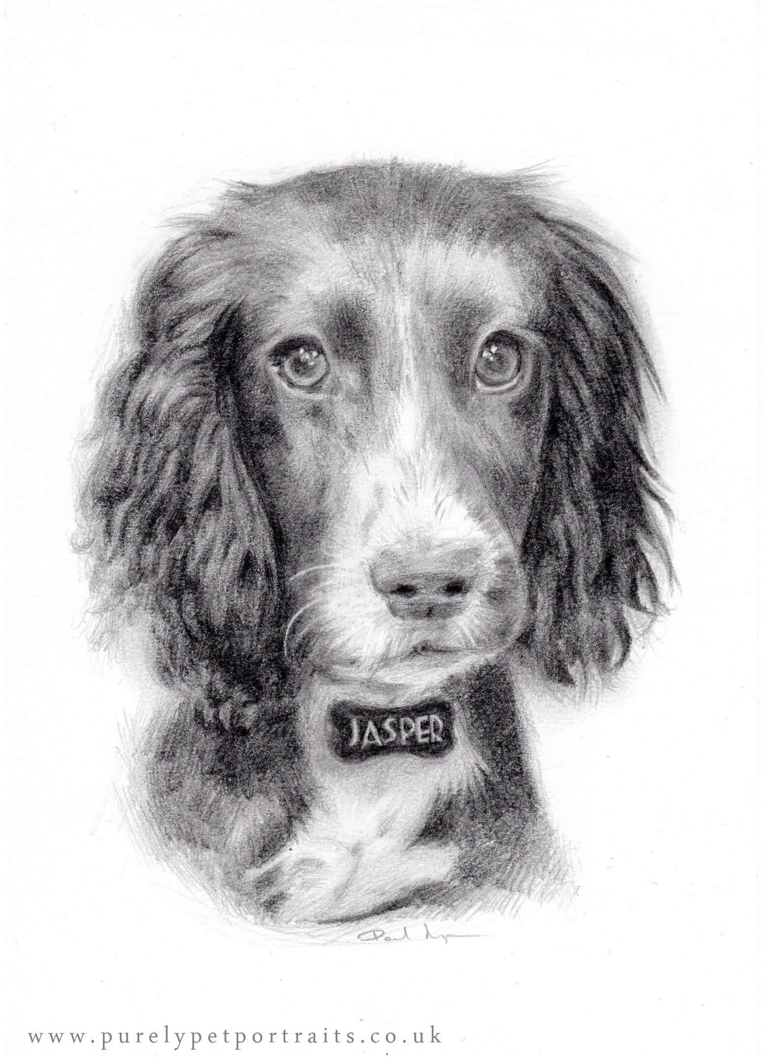 Portrait of Jasper.jpg