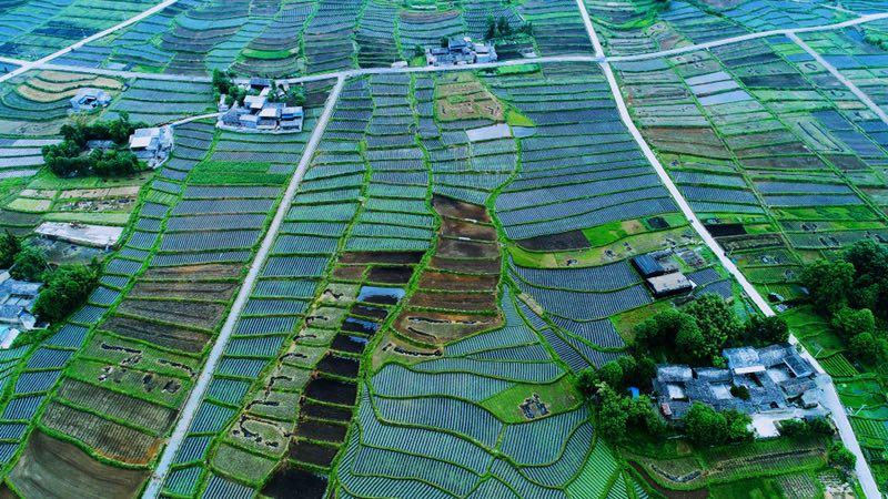2018GFY_TC_rice.JPG