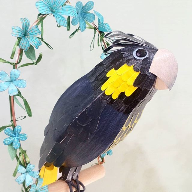 Agatha the Yellow Tailed Black Cockatoo