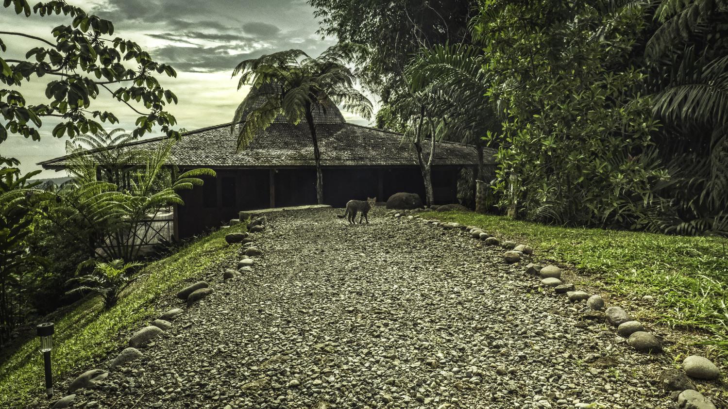 costa-rica-yoga-retreat-venue-experience-retreats-Potoo_Path.jpg