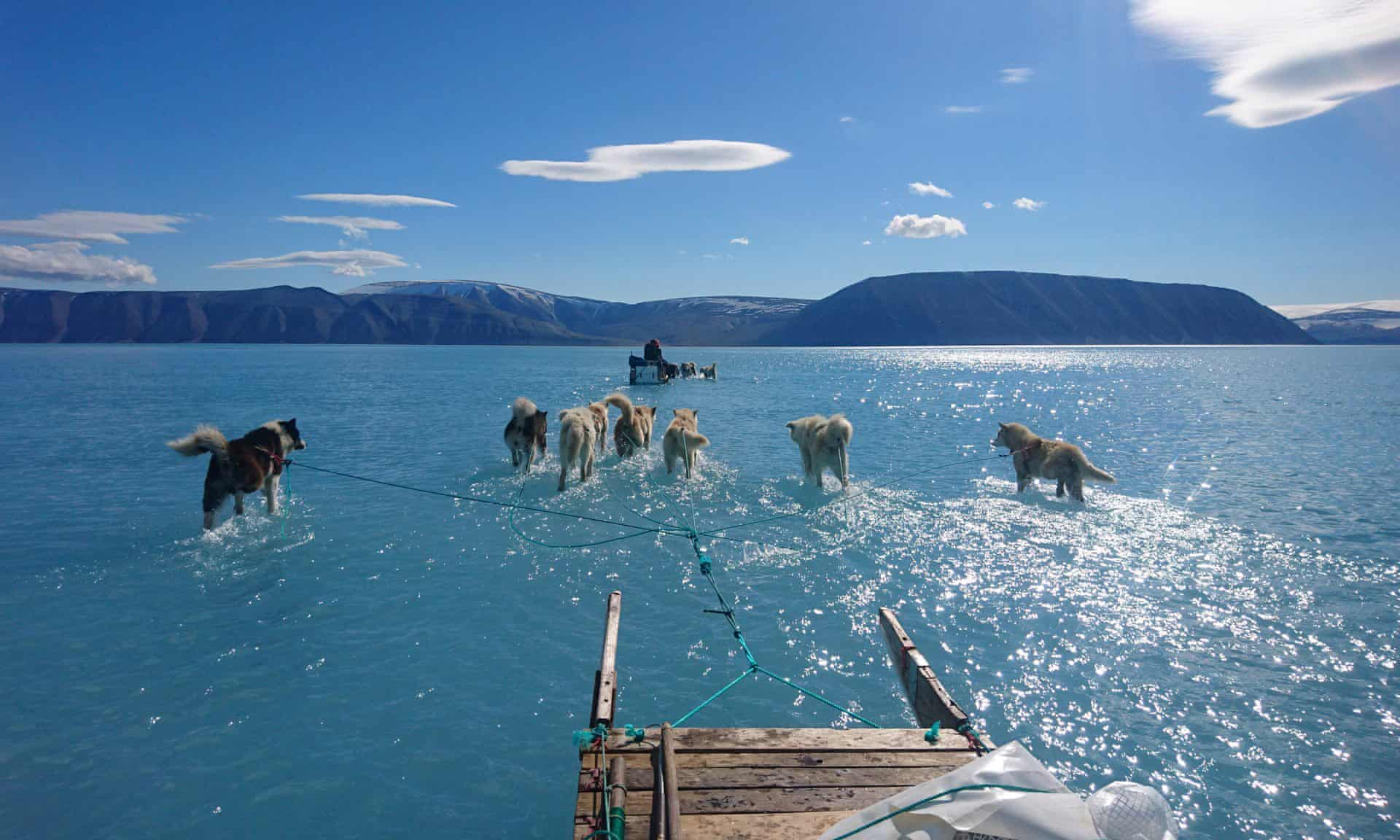 """SLED DOGS WADE THROUGH RECORD ICE MELT. - In June, 2019, a 40F (!! 22.2C) spike in Arctic temps made possible this image of sled dogs wading through surface water melt. It's a great photo to share because it shows how record sea ice melt is causing rapidly changing conditions for climate scientists, and helps us understand the connection to sea-level rise, which is a concern for those of us who live & work in coastal cities.""""Our climate model simulations expect there to be a general decline in the length of the sea ice season around Greenland, [but] how fast and how much is very much dependent on how much global temperature rises.""""— Ruth Mottram, climate scientist at the Danish Meteorological Institute. Her colleague Steffen Olsen took the shot June 13, 2019 on a routine mission through the Inglefield Gulf in northwest Greenland."""