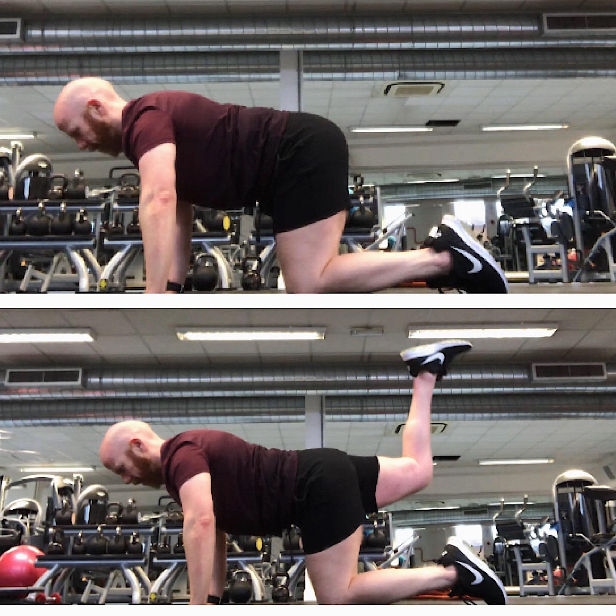 Quadruped+Hip+extension+Three+Pillars+of+Fitness.jpg