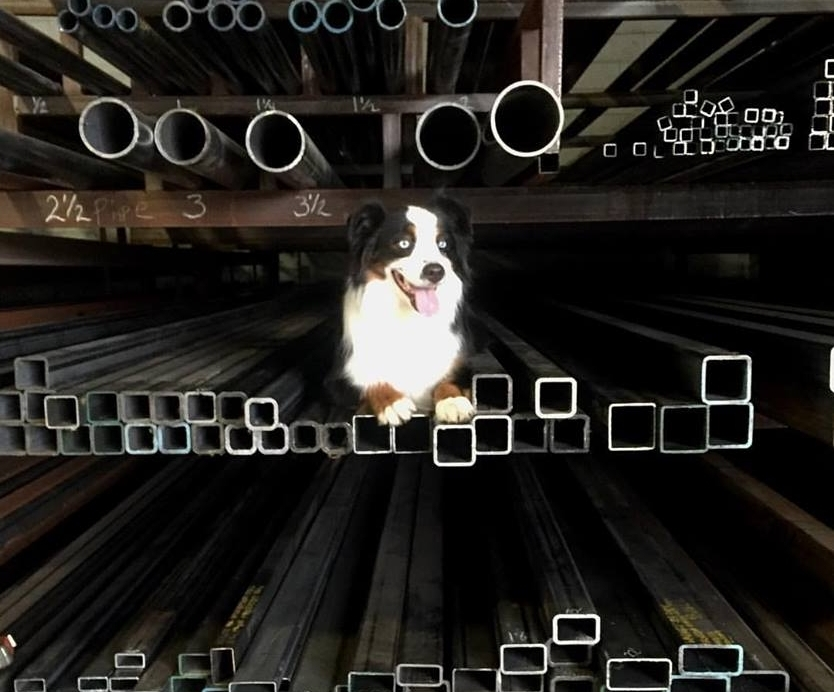 Jack - Ali's Australian Shepherd that is a part time shop dog, part time award wining agility dog.