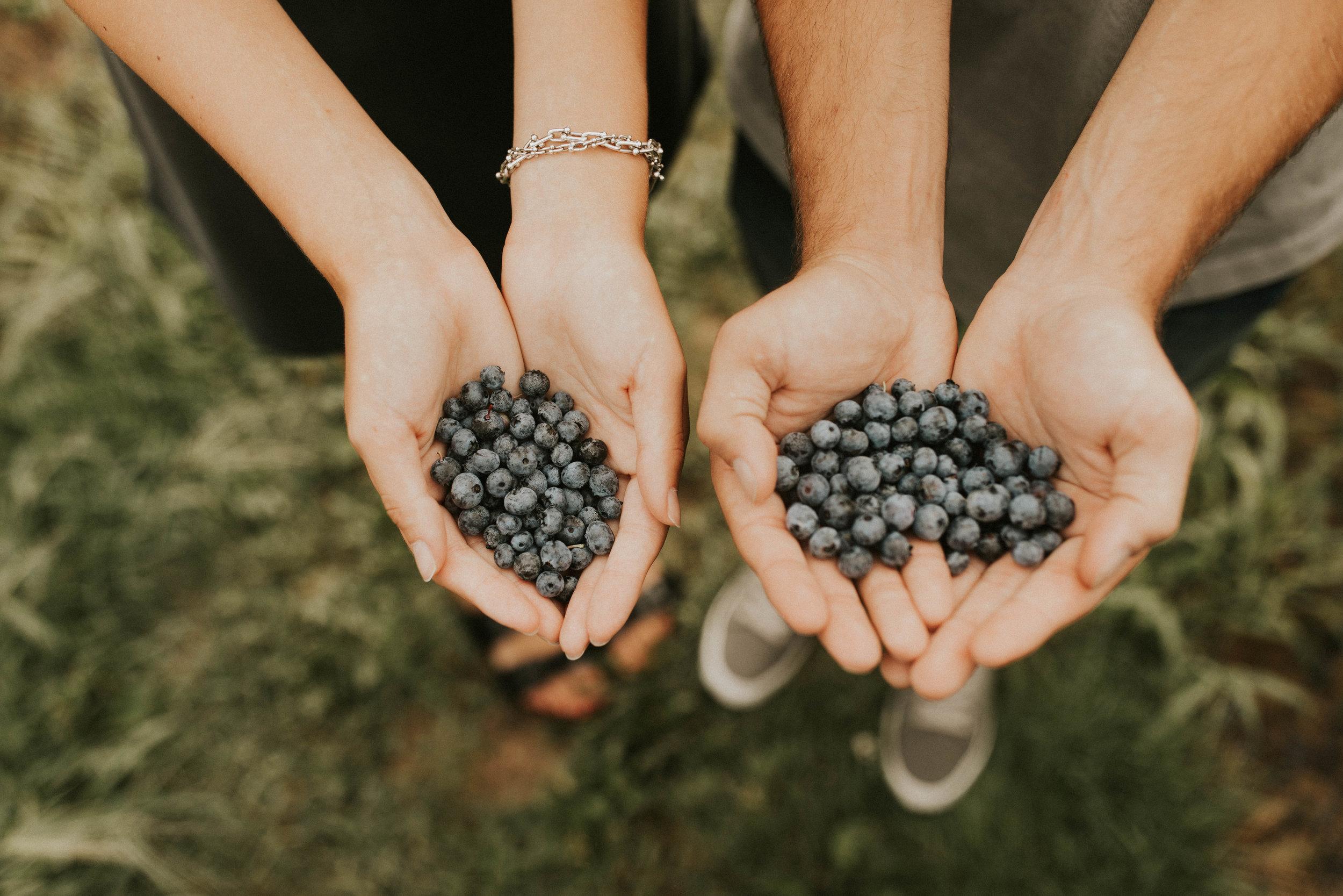 blueberry field photoshoot