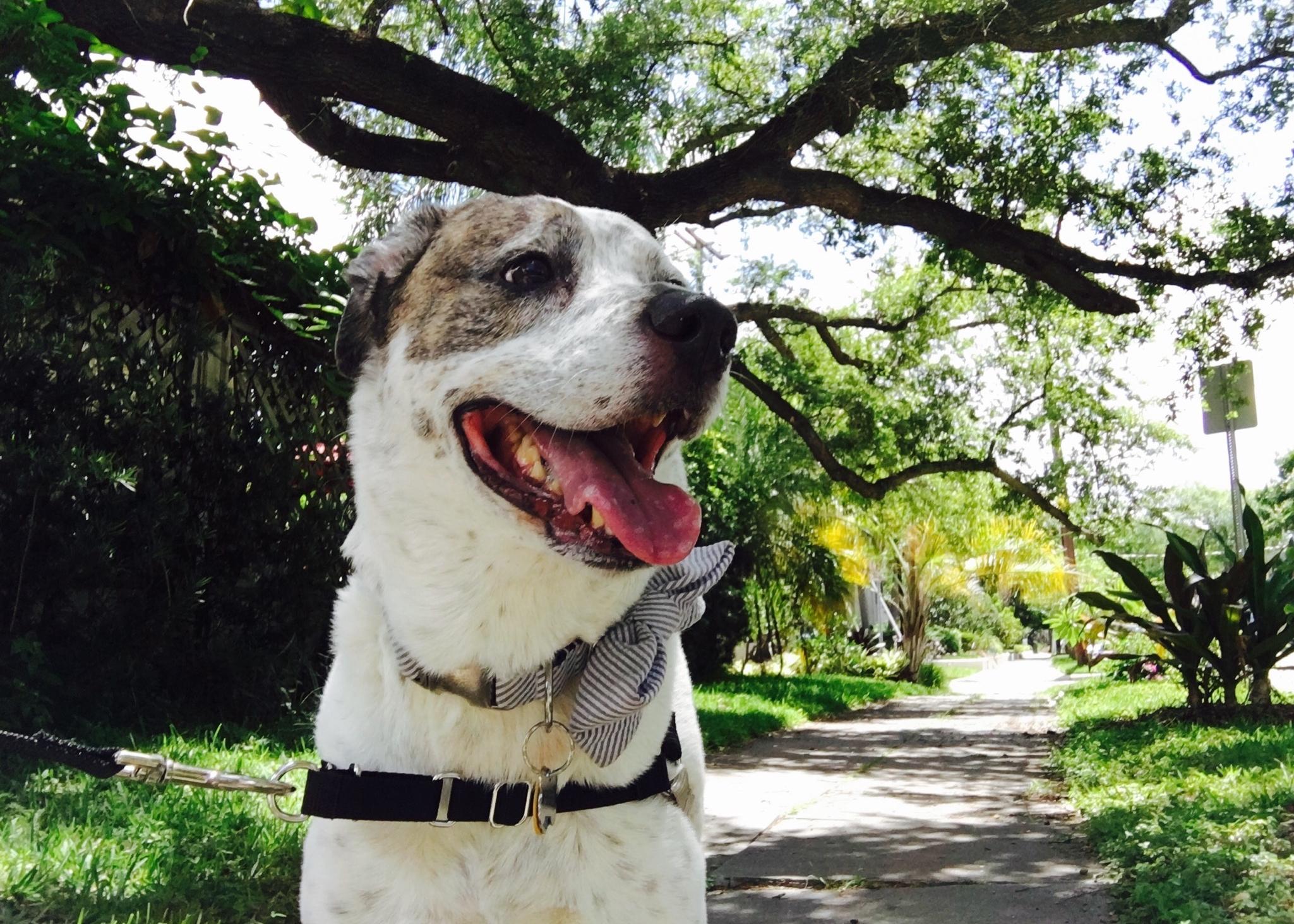 Dog walks & pet visits - 15 min. Pet Visit (Cats, birds, etc.) - $1515 min. Quickie Walk - $1530 min. Warm-Up Walk - $2045 min. Work-Out Walk- $3060 min. Marathon Walk- $40