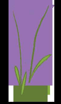 Lavender_2.png