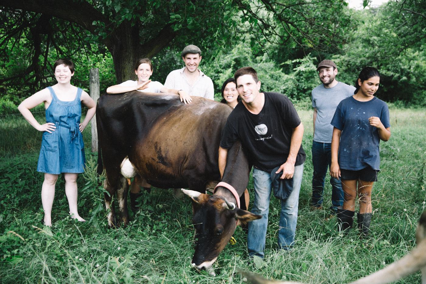 Weckerlys+Camphill+Cow.jpg