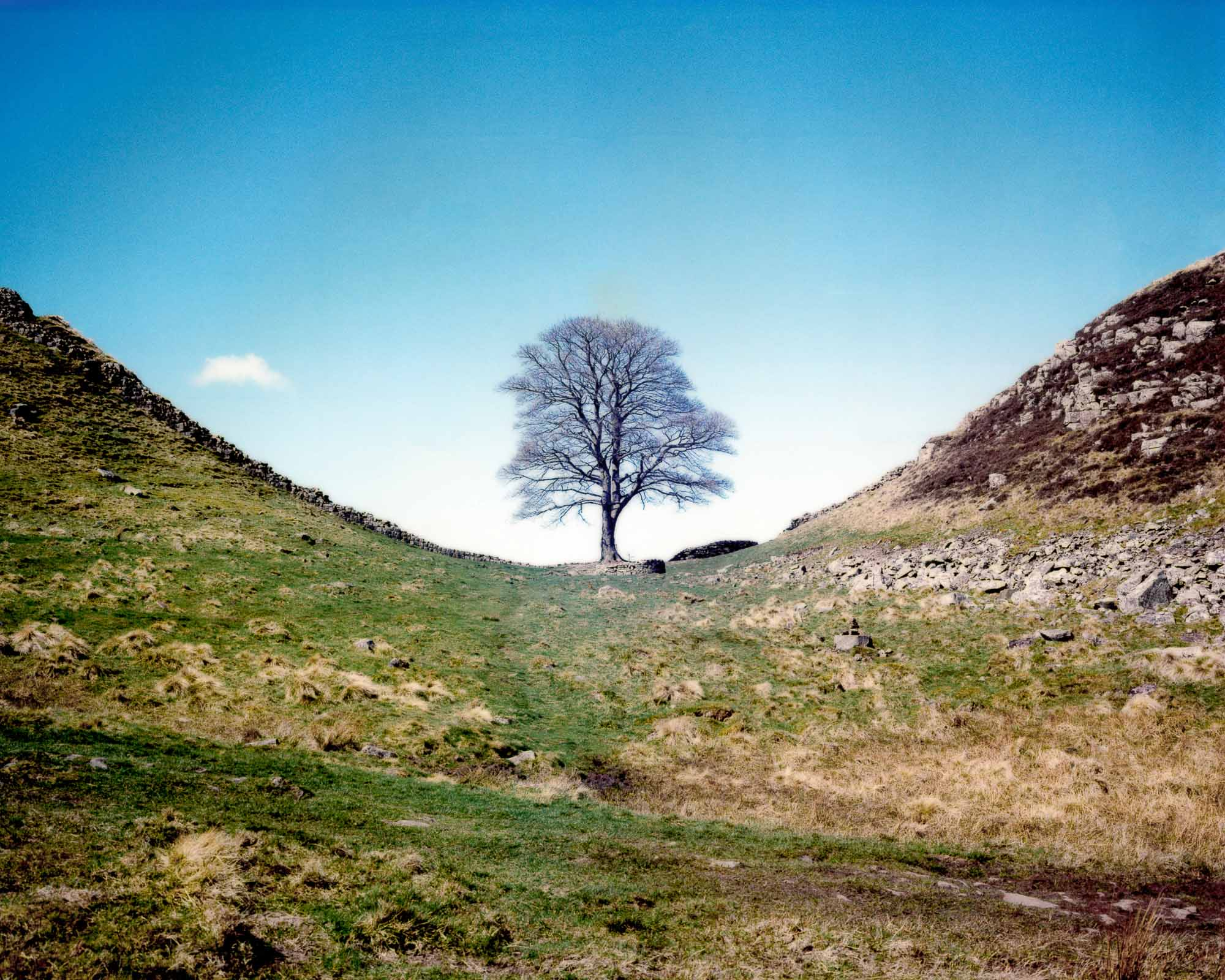 Colour Sycamore Gap.jpg