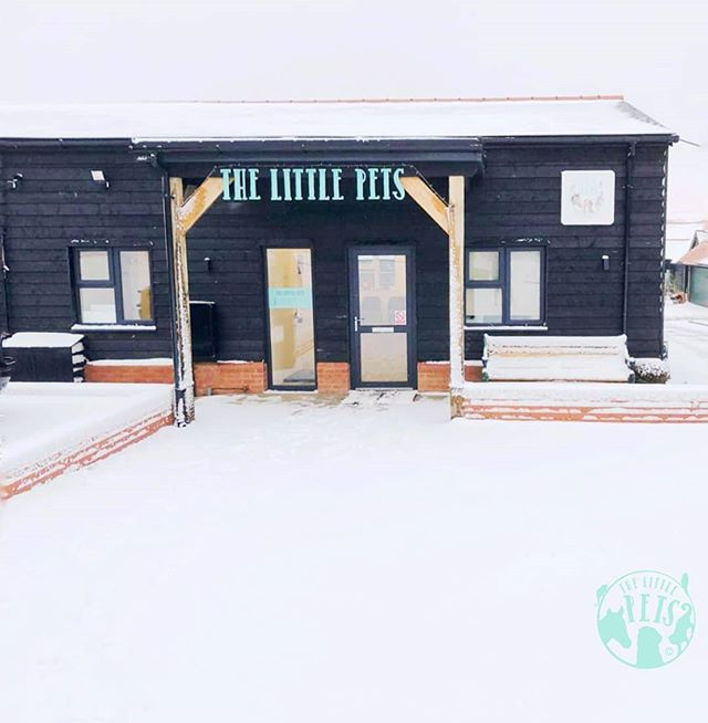 Our practice in a beautiful shade of white ❄ Do drop by for a visit, we have prepared ample signage and parking space to ensure you get to us safely and easily.  Also, why not take advantage of the referral program we are currently running? It's simple, tell your friends and family about us. If they quote your name on their first visit, they get £10 off their next visit with us and so do you ;) Sounds good doesn't it?  Head on over to our website https://www.thelittlepets.com/referral for more details or send us a message here and we'll answer your questions for you.  See you soon!  P.s. Offer ends 31 Mar 2019. . . . . . . . . . . #animals #animal #pet #dog #cat #dogs #cats #rabbit #rabbits #hamsters #horses #farm #countryside #photooftheday #cute #pets #instagood #love #nature #animallovers #pets_of_instagram #petstagram #leightonbuzzard #bedfordshire #miltonkeynes #luton #england #london #unitedkingdom