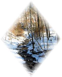 old_creek.jpg