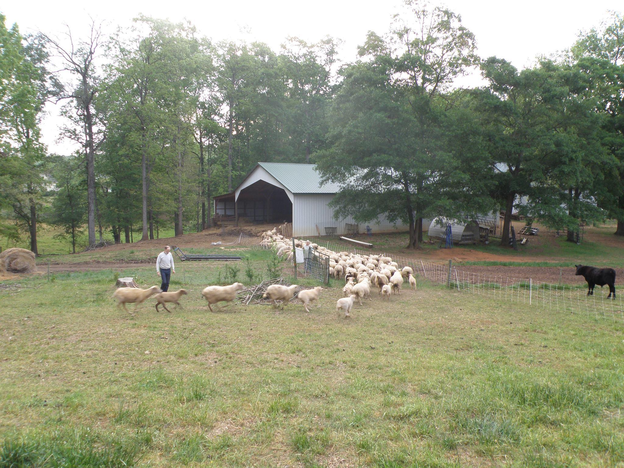 Image via  Hope Springs Farm