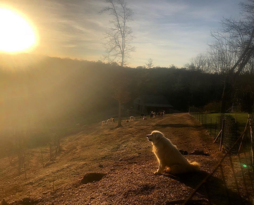 Image via: Last Penny Farm Alpacas