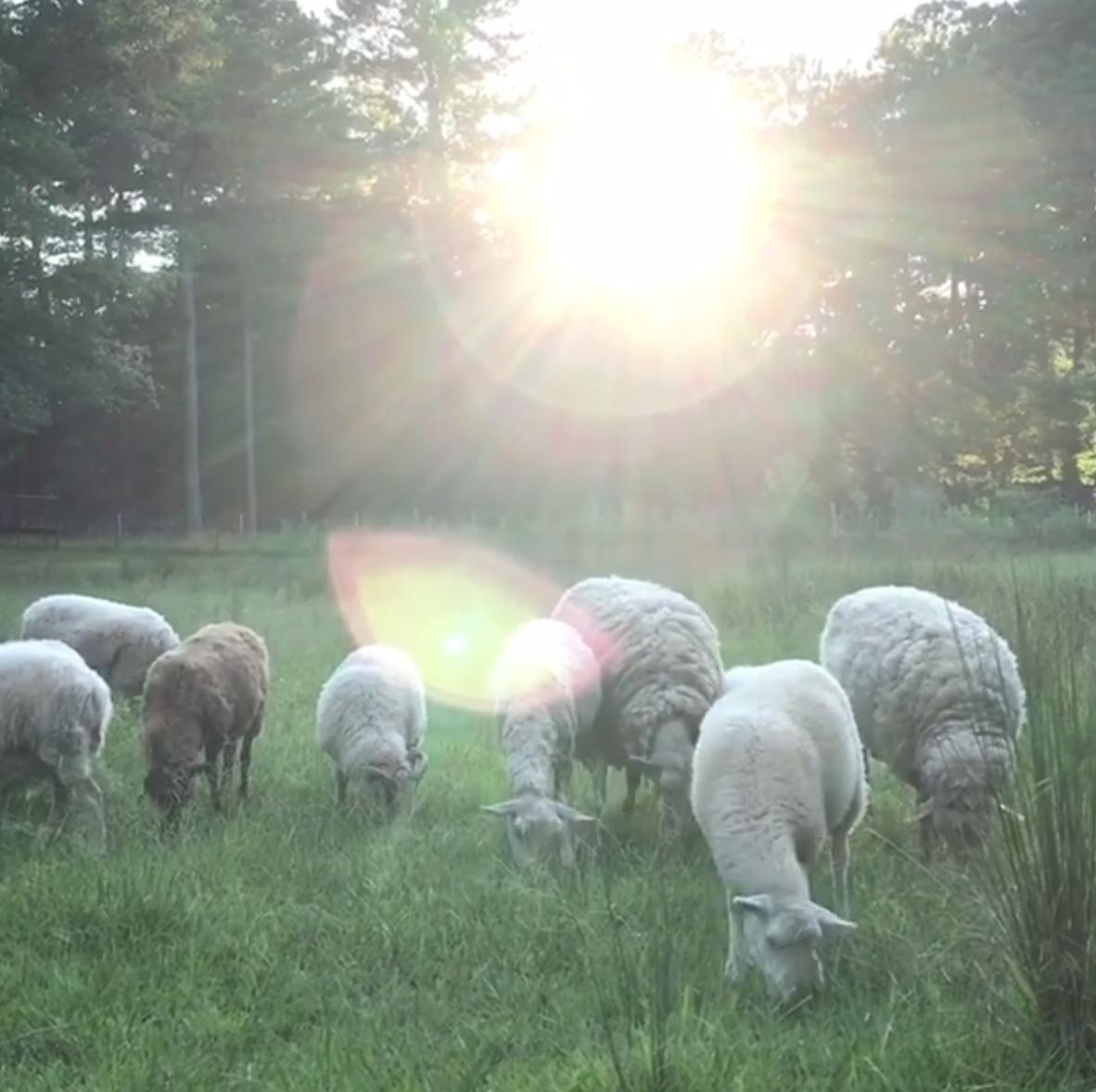 Image Via:  Pippinarrow Cottage Farm