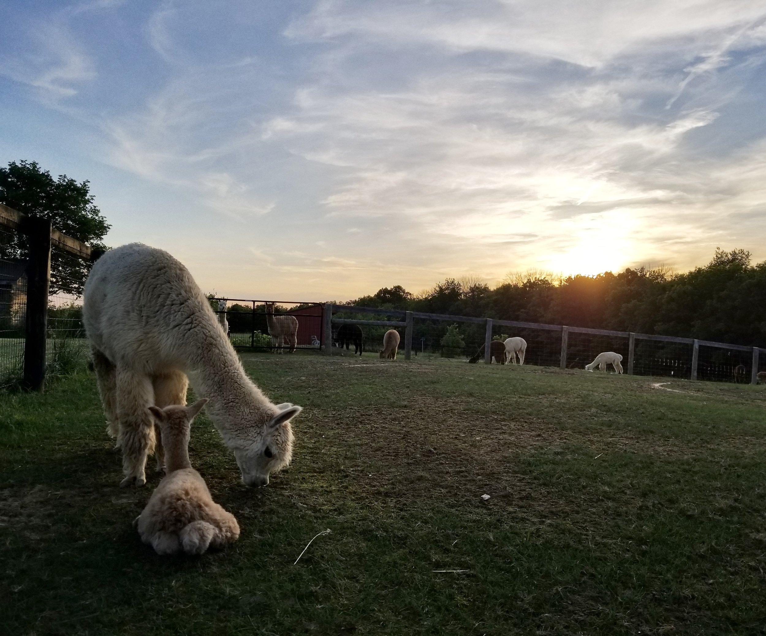 Image via:  Wampa Stomp Farm
