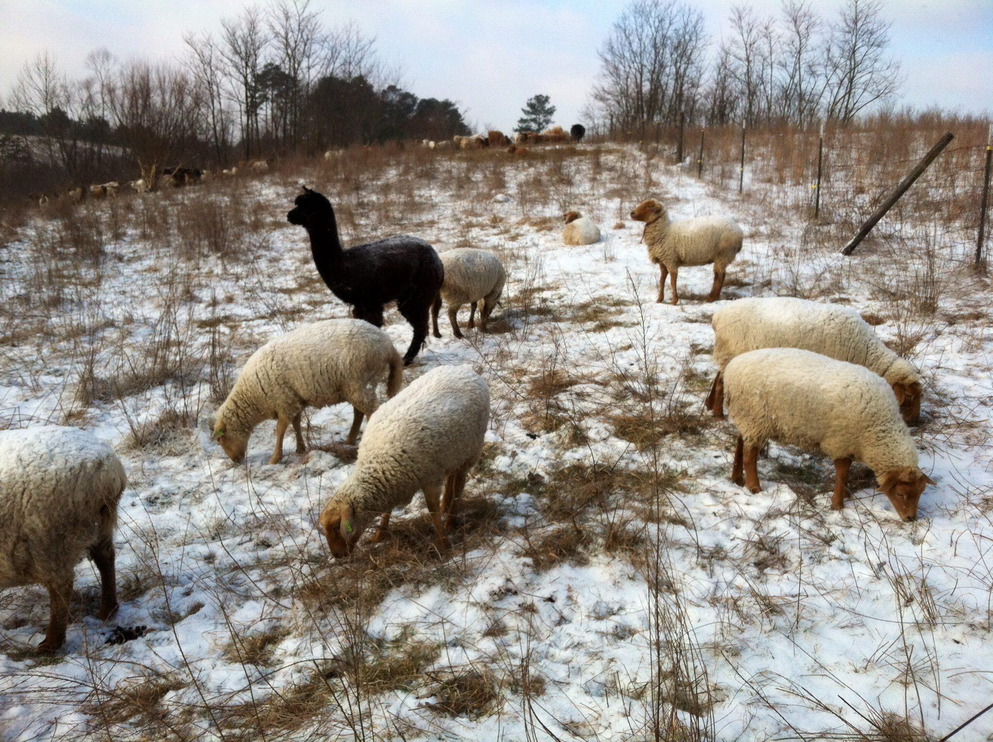 Image via:  Solace Farm Homestead