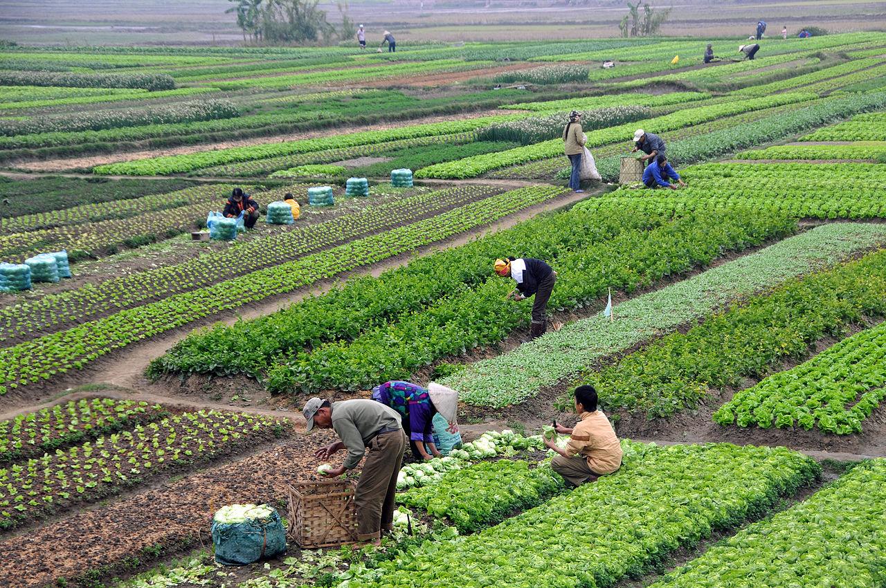 Smallholder farming in Vietnam