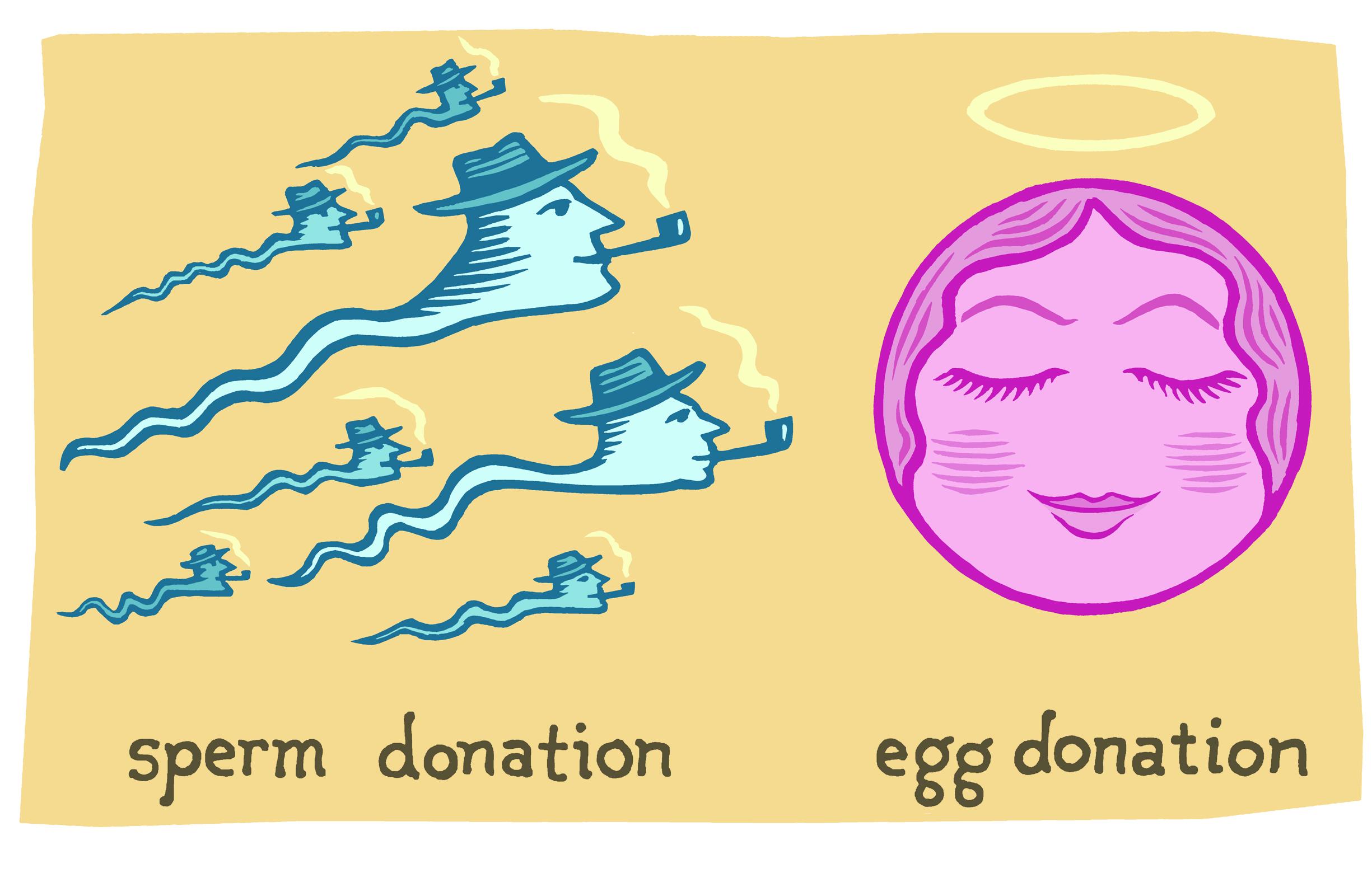 YAM sperm and egg finals.jpg