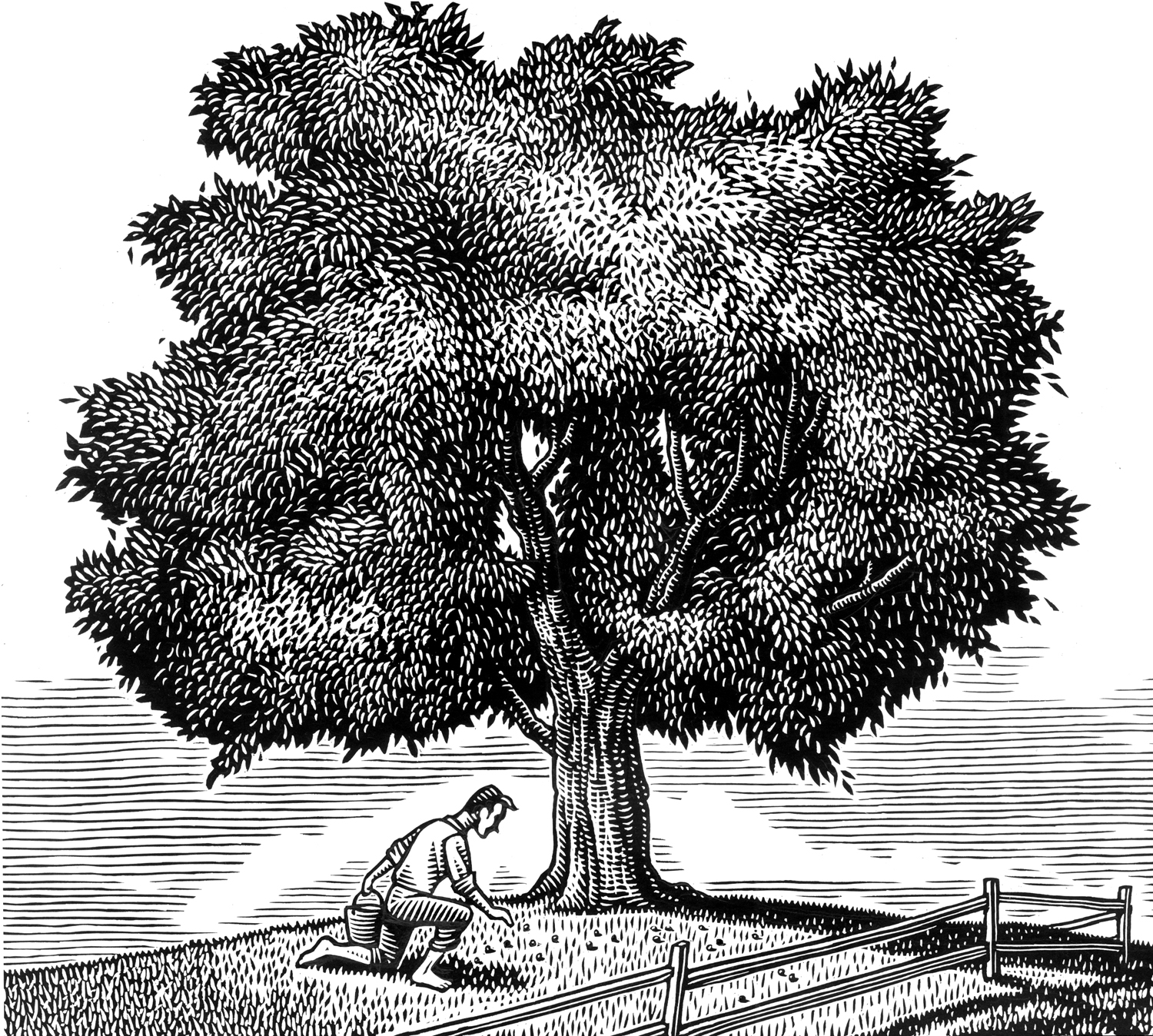 Nemec oak tree.jpg