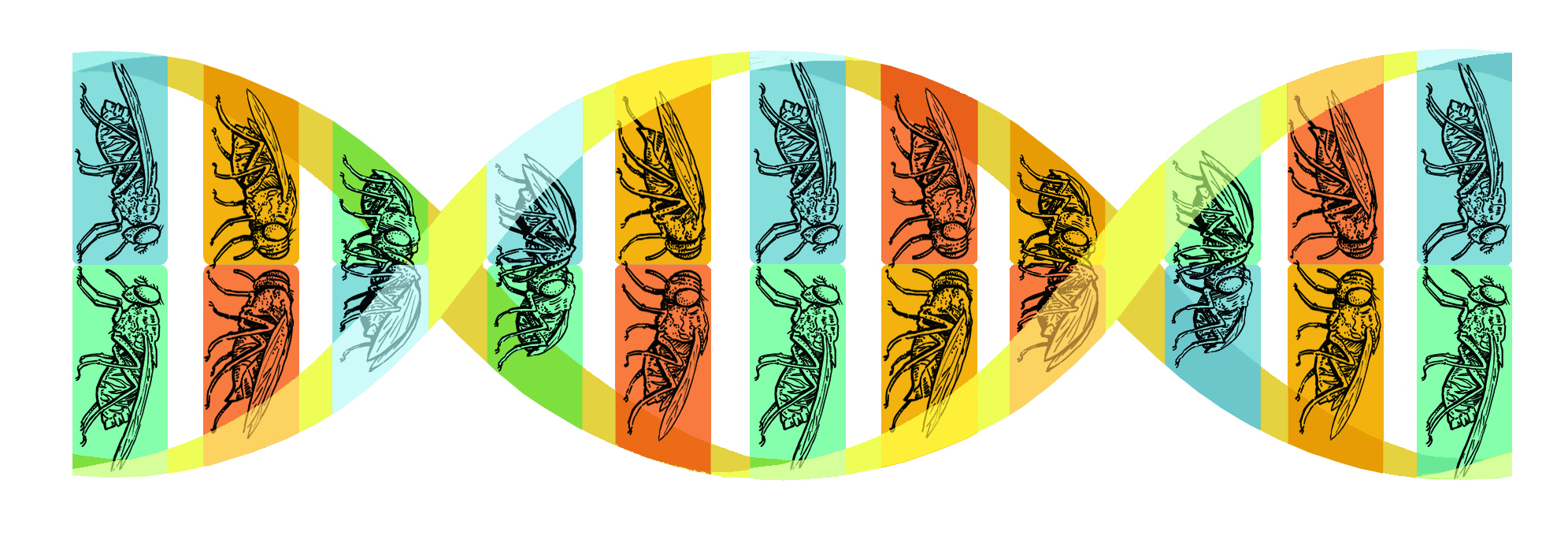 tsetse fly genome final.jpg