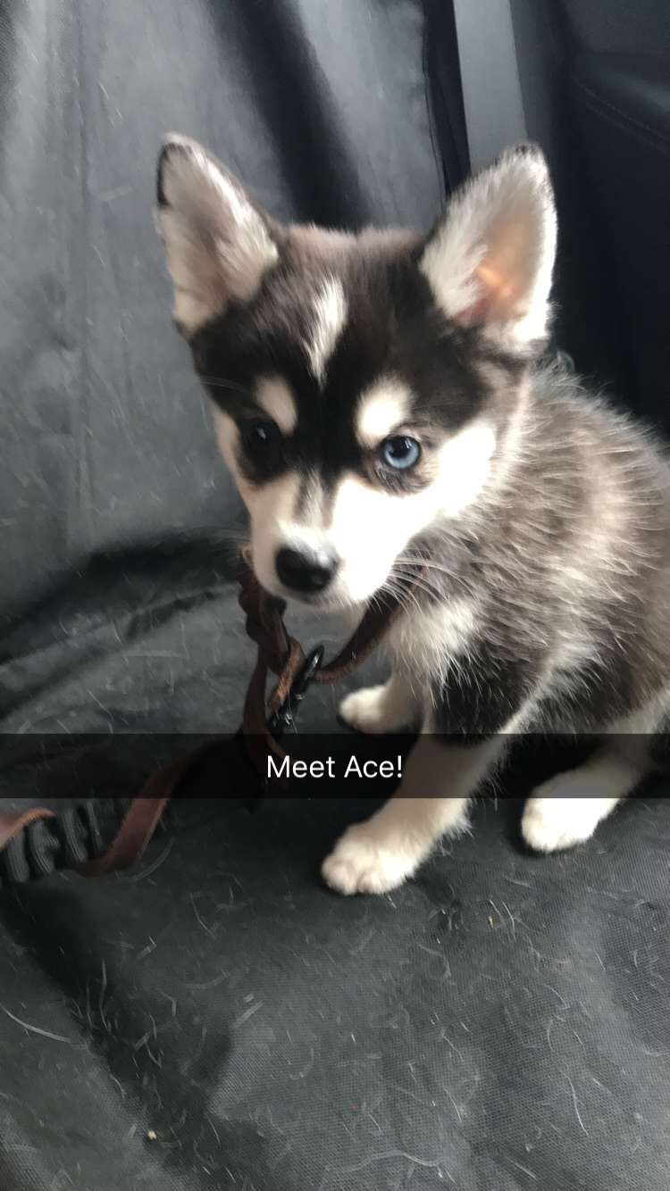 Ace, the day I got him