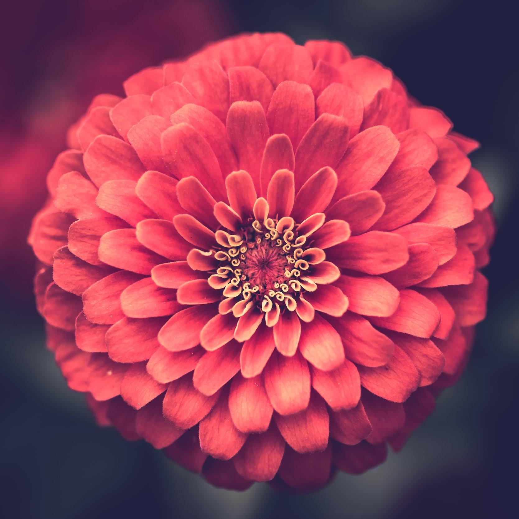 den usynlige blomsten -