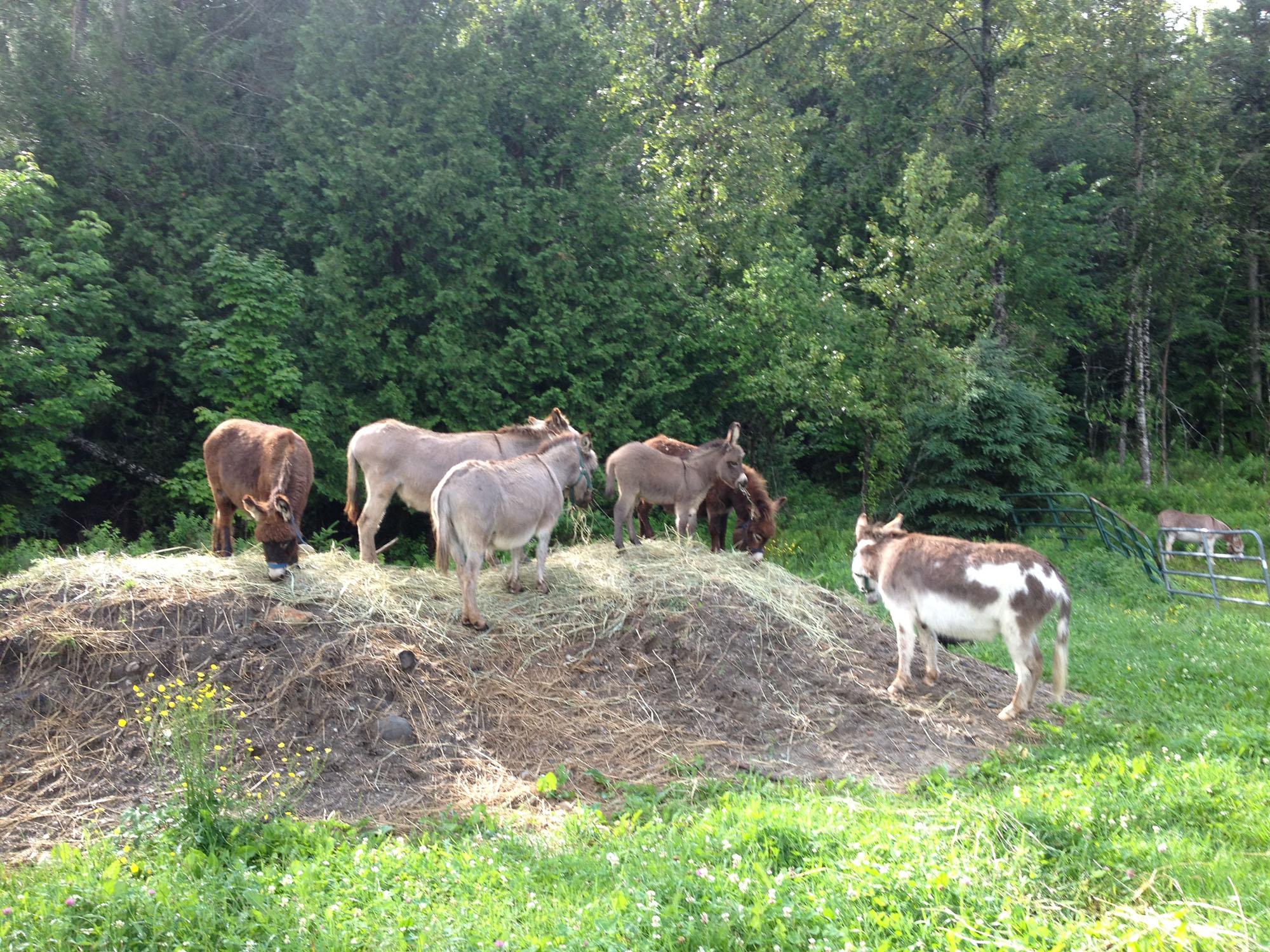 donkey 3.jpg
