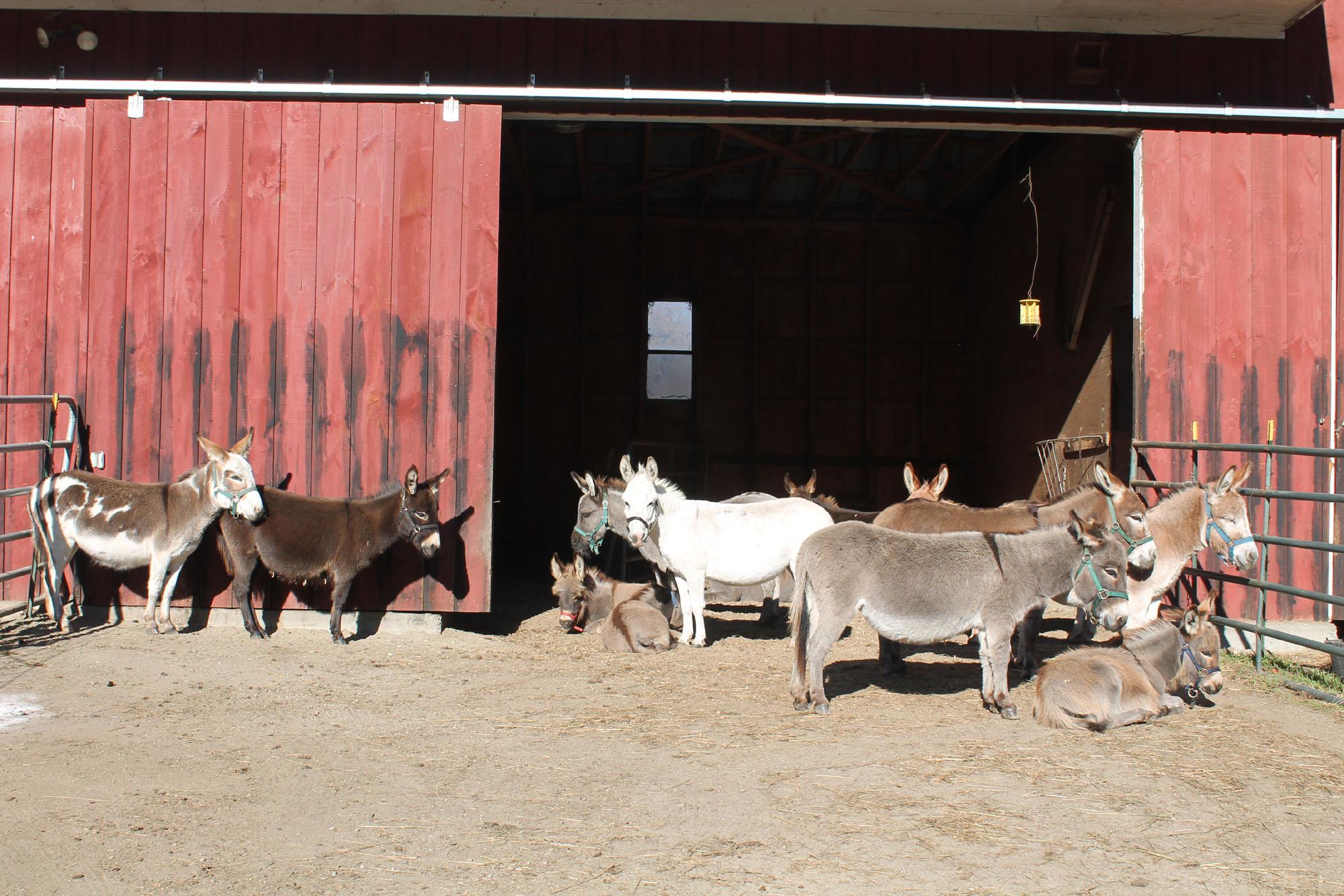donkey 5.jpg