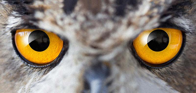 FACE TO FACE - Now you can meet face to face the birds that you've only heard as a distant Twit-Twoo. From the giant Siberian Eagle Owl to the tiny Scops Owl you can learn about their habits and habitats and how to help in their conservation. Let these awesome creatures inspire you to make a difference.