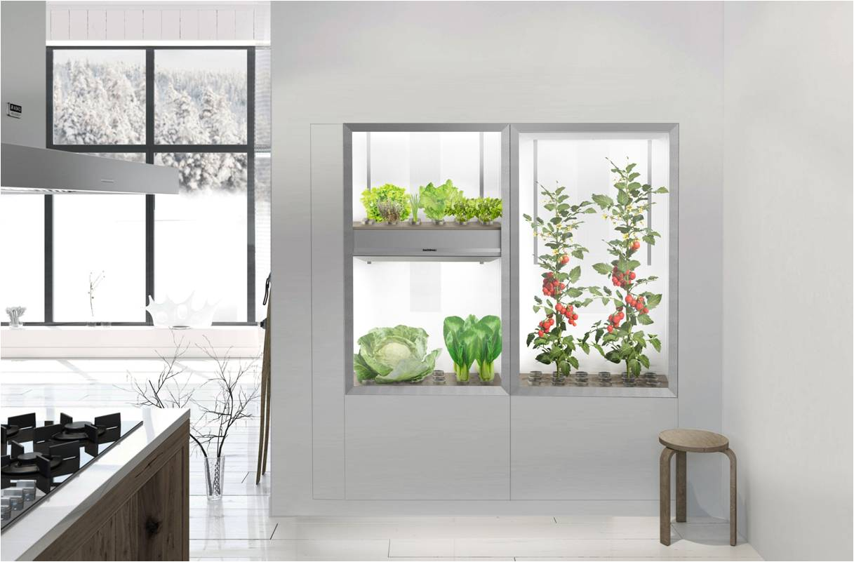 Home_garden_in_kitchen.jpg