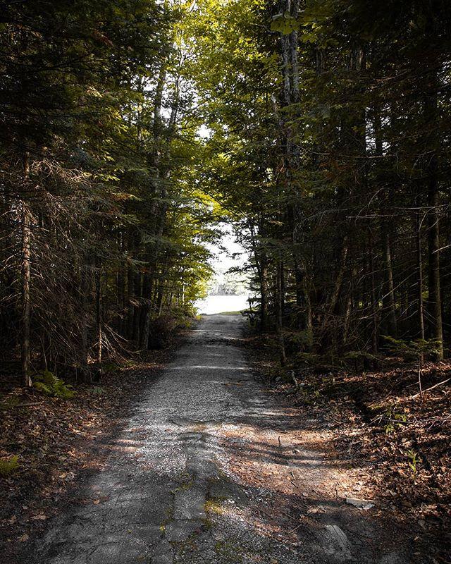 Summer Adventures 🌿 - - - - - #summer #forest #summertime #explore #adventure #explorer #adventures #sun #summervibes #exploring #trees #tree #nature #exploretheworld #canada #qc #quebec #summerday #road