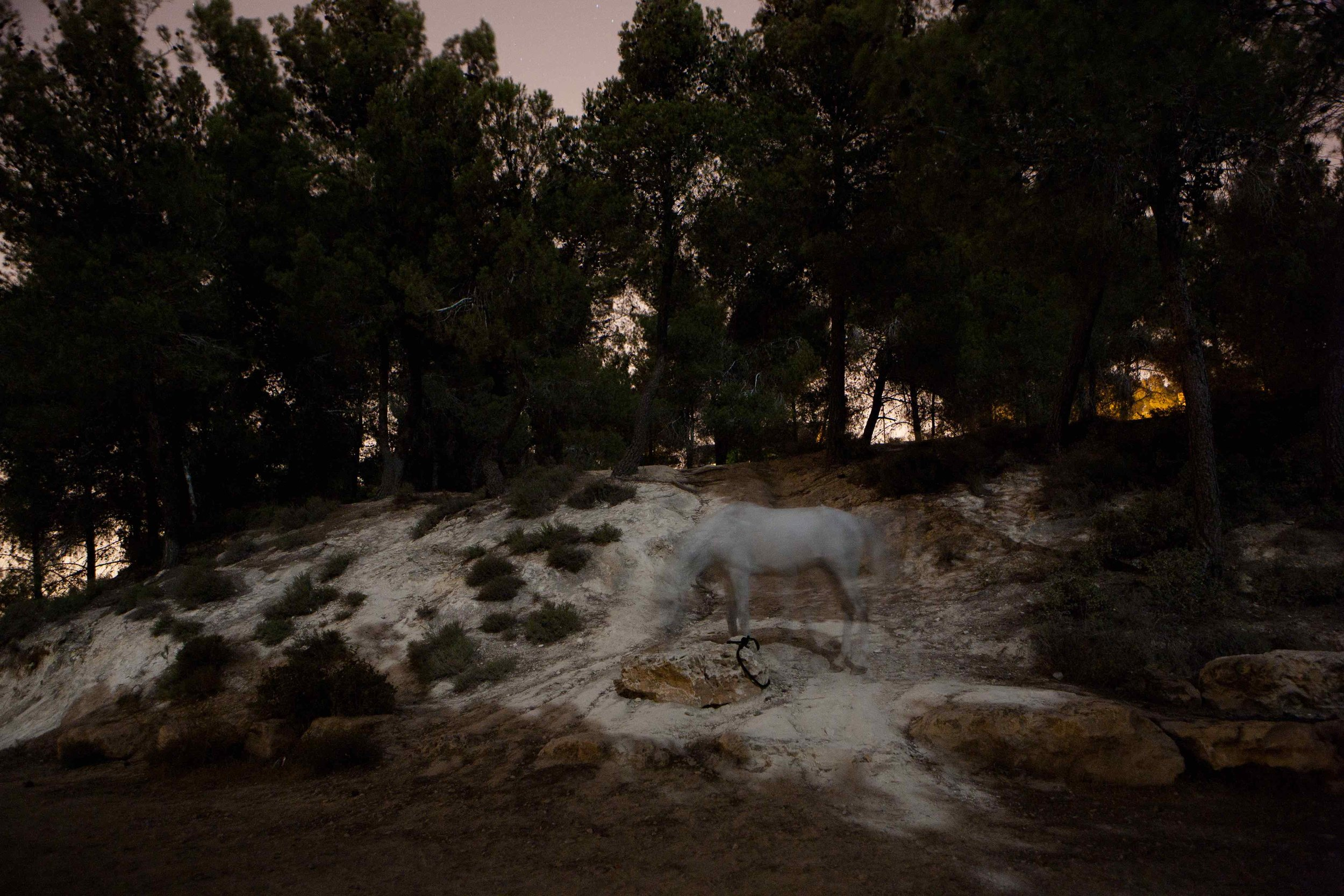 White Horse in the Forest / Jerusalem, Israel 2011
