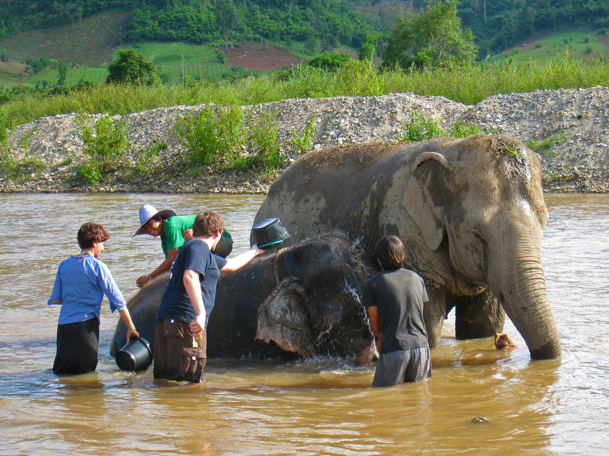 Bathing elephants at a rescue and rehabilitation center in Chiang Mai, Thailand.