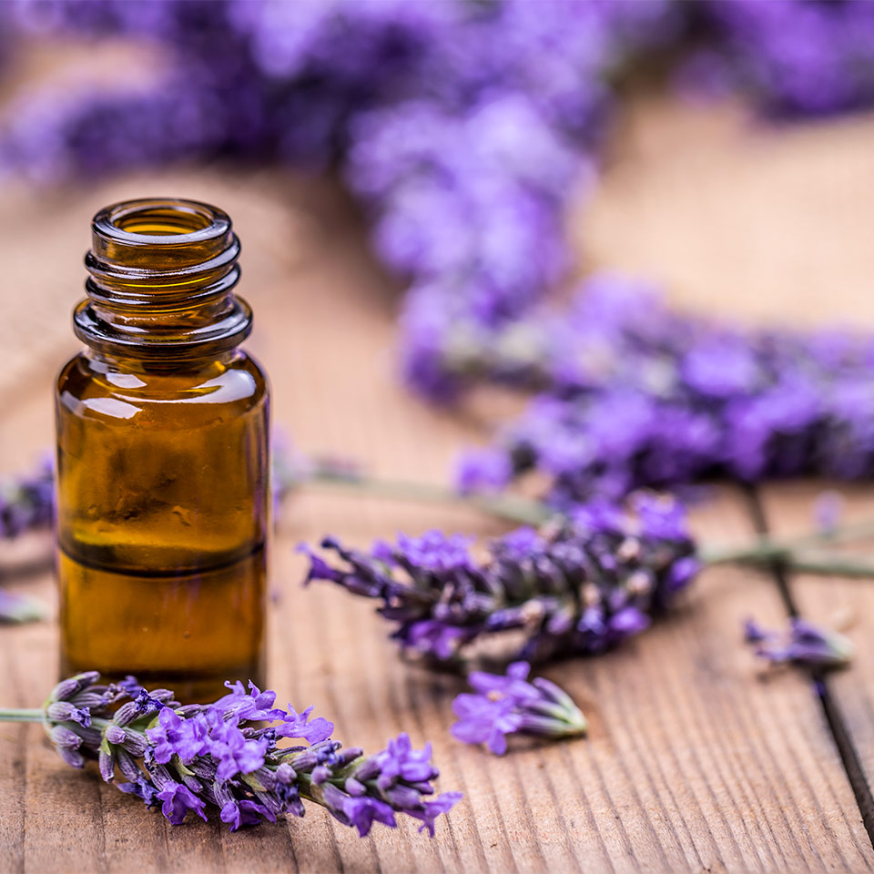 nowledge-lavender-oil-iso-standard-faq-thumb-2x.jpg