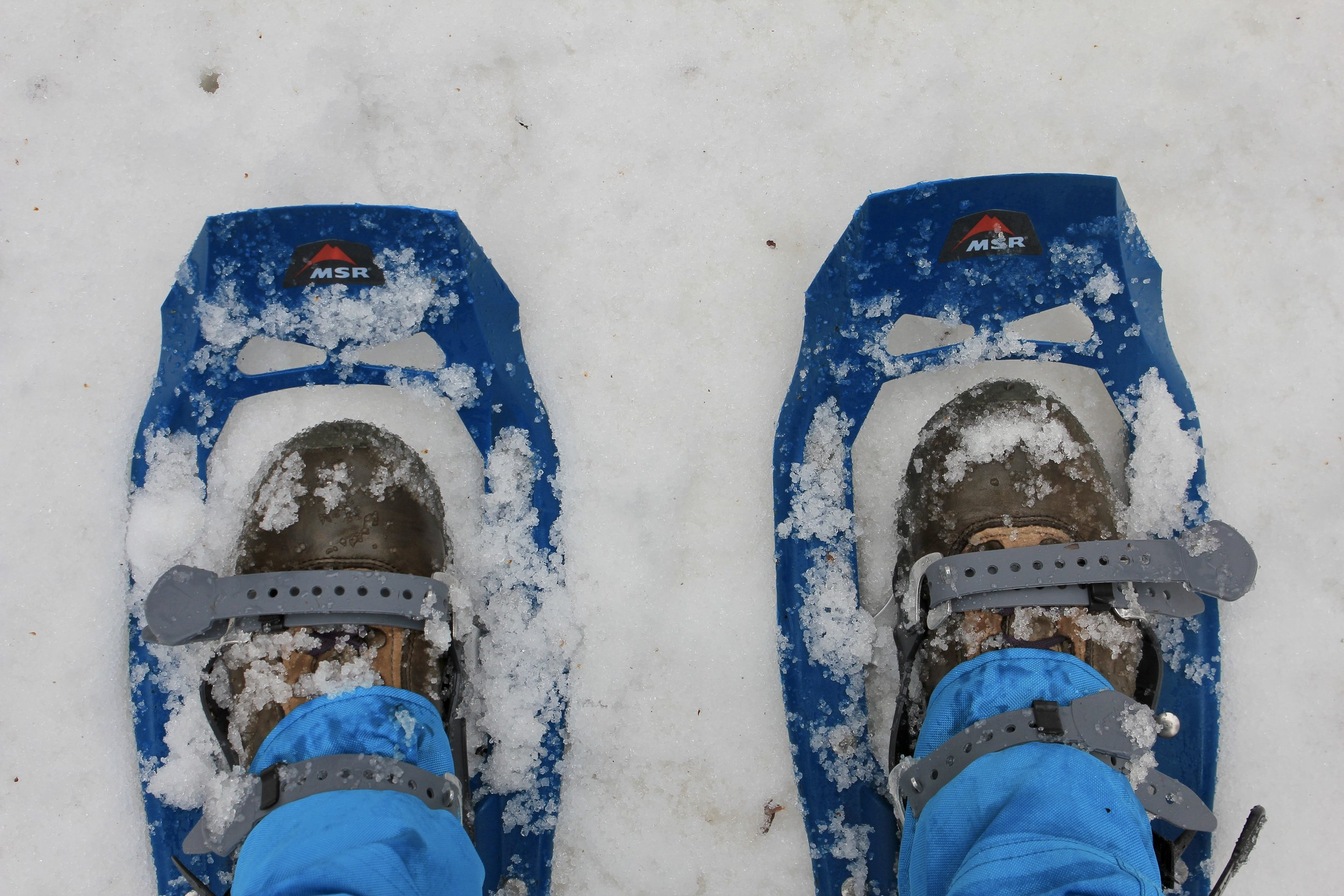 msr evo snowshoes.jpg