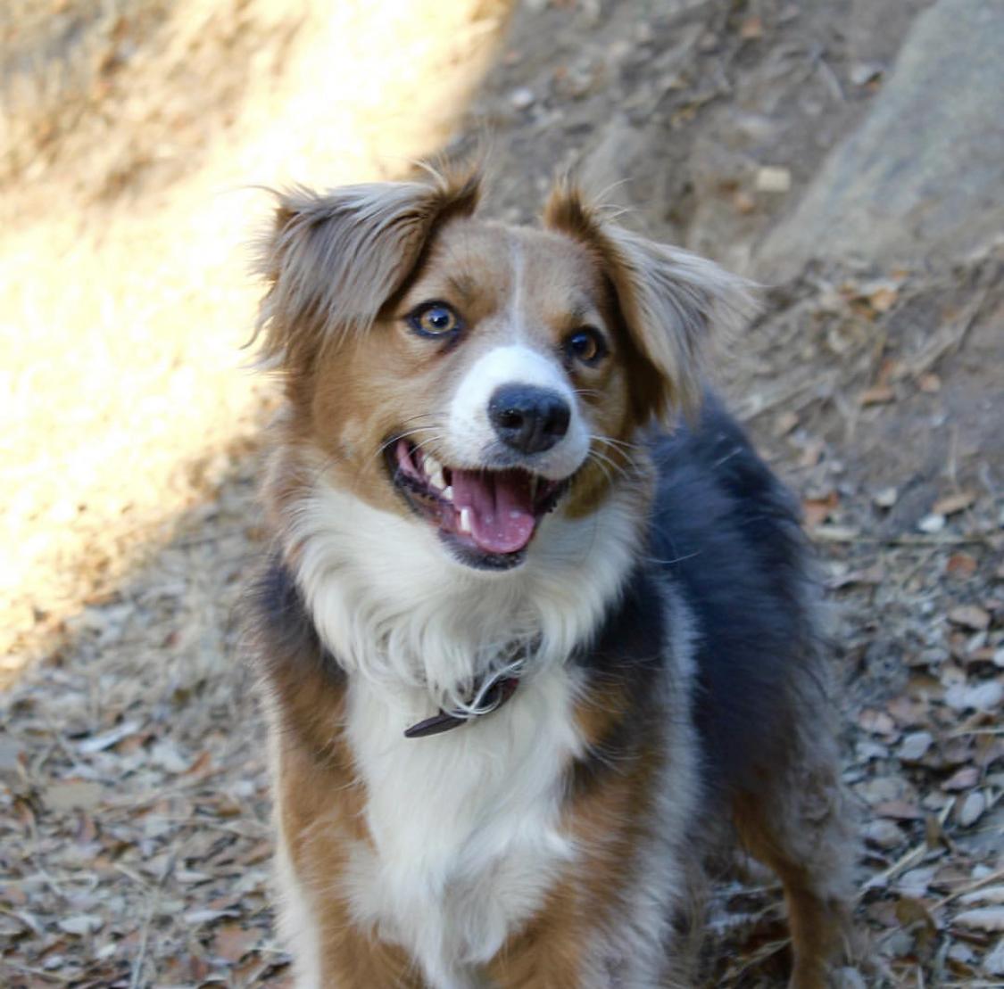 My pup, Sequoia