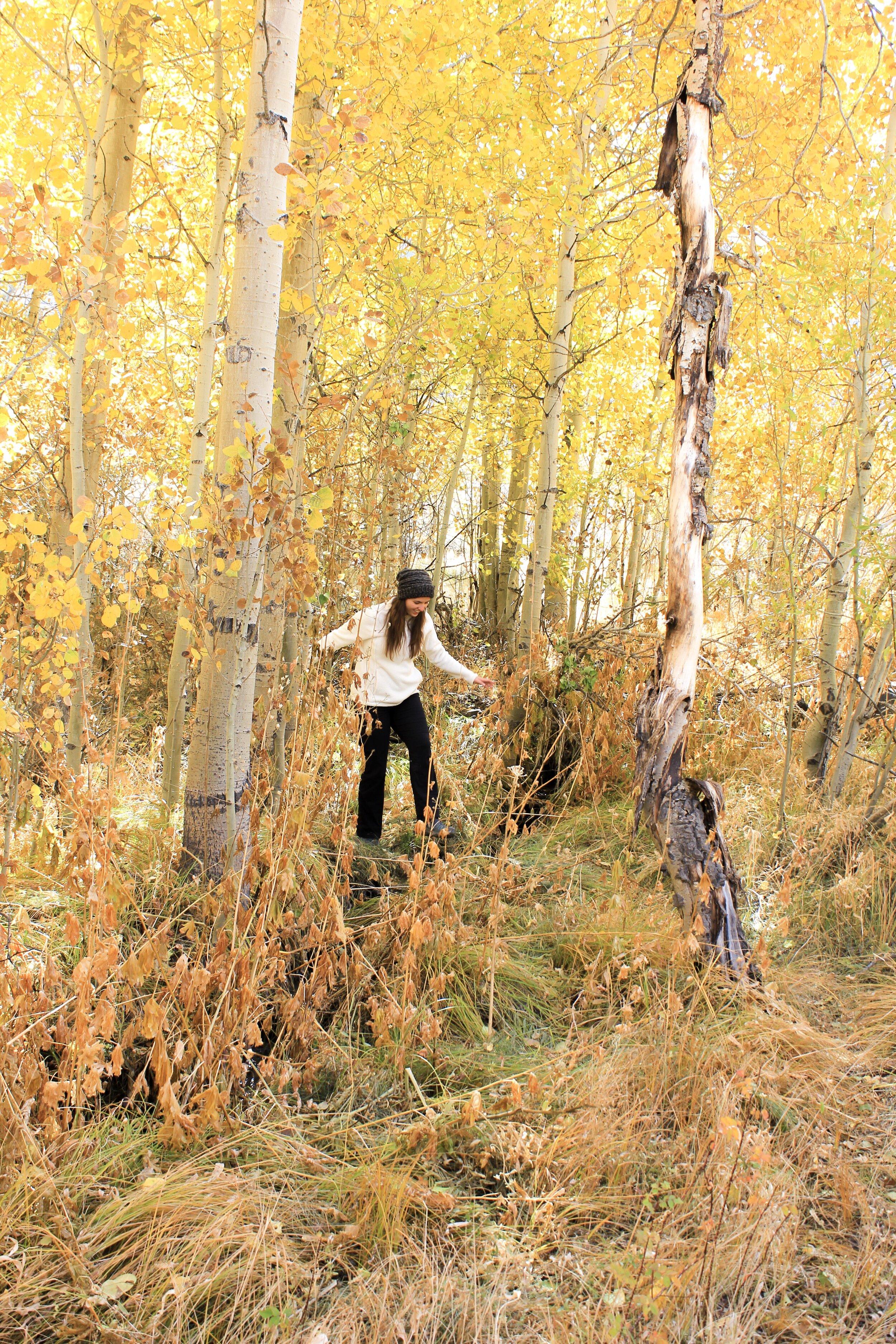 fall colors eastern sierra.JPG