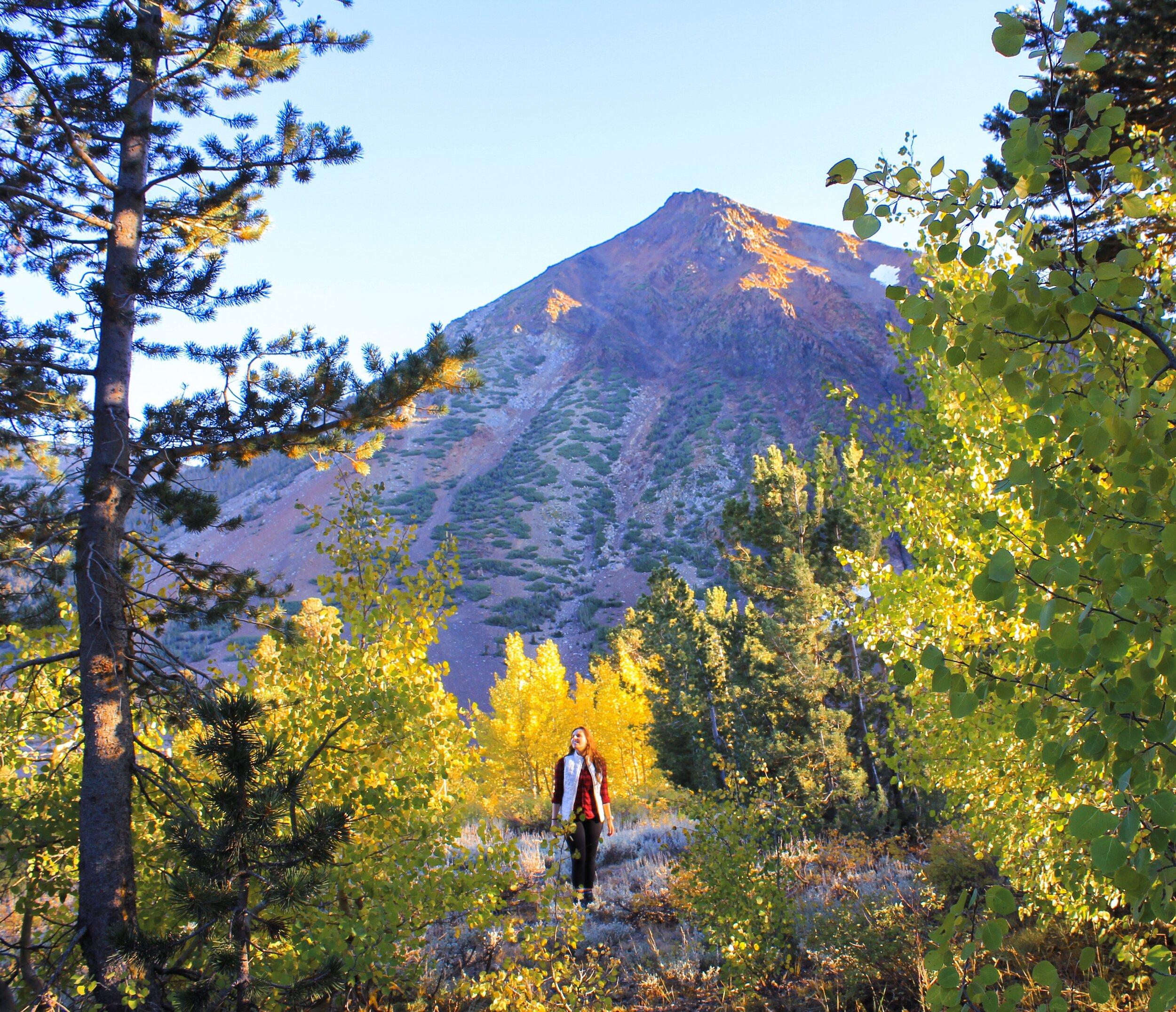 fall colors eastern sierra california