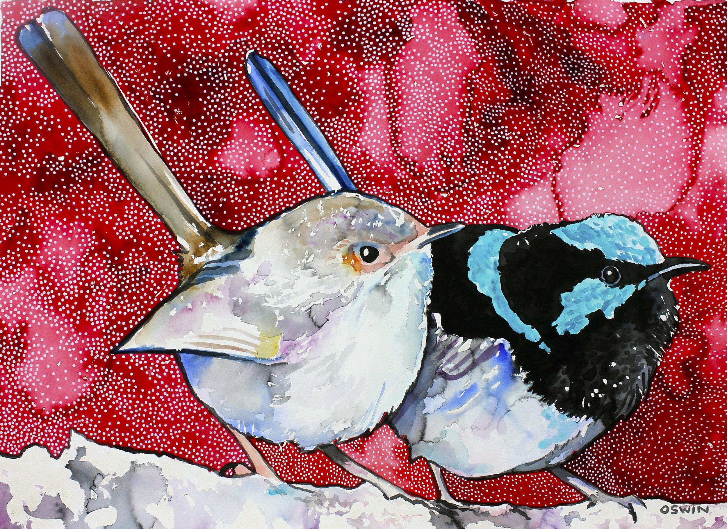 Superb Fairy Wrens