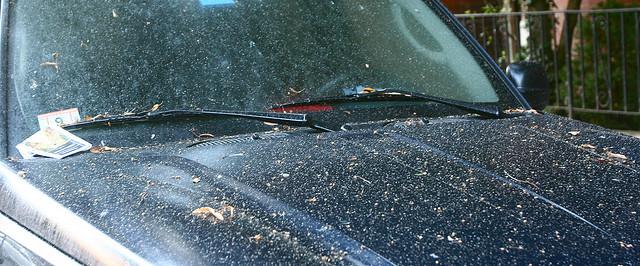 Tree Sap Damage on Car