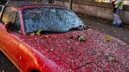 bird poop on car funny