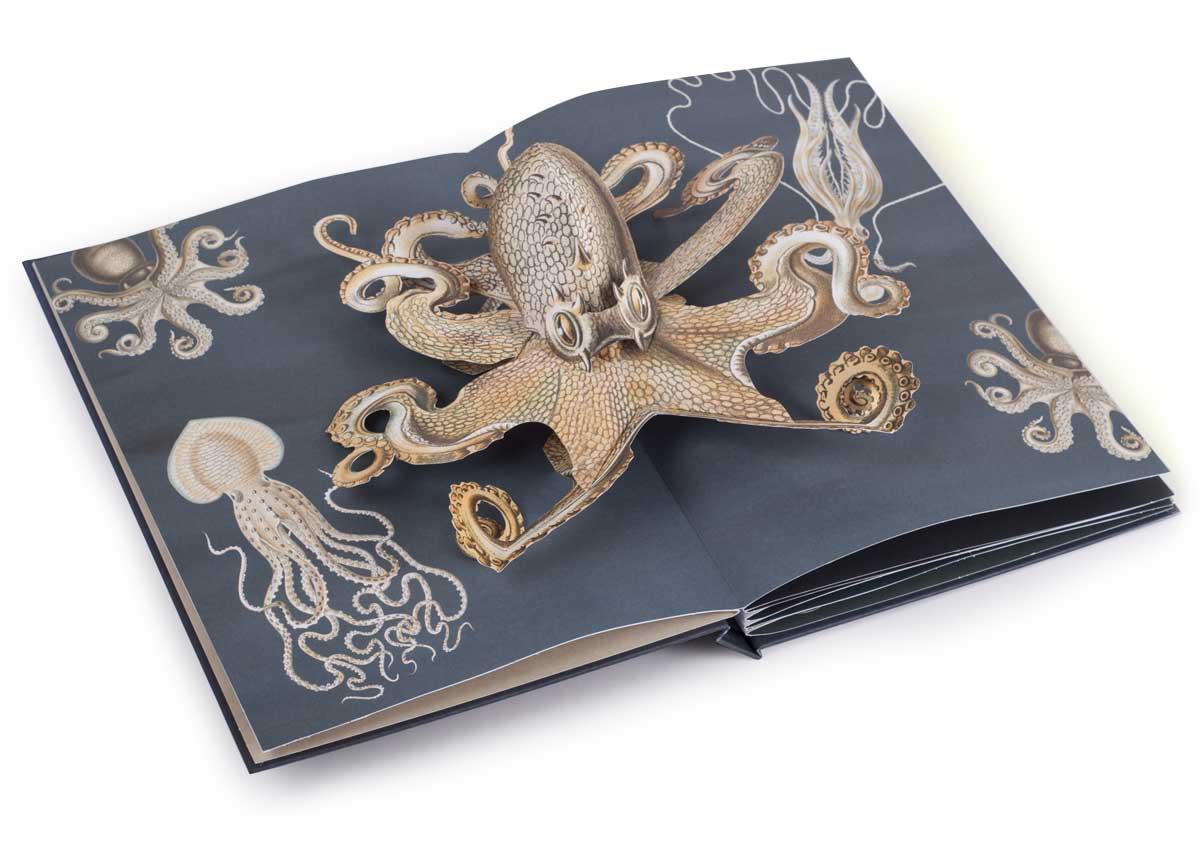 Creatures-of-the-Deep_Octopus_M.Biederstaedt_1200x850.jpg