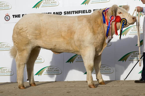 Smithfield beef champion 2011, Ewan MacPherson and Sons' Charolais heifer Allanfauld Fizz