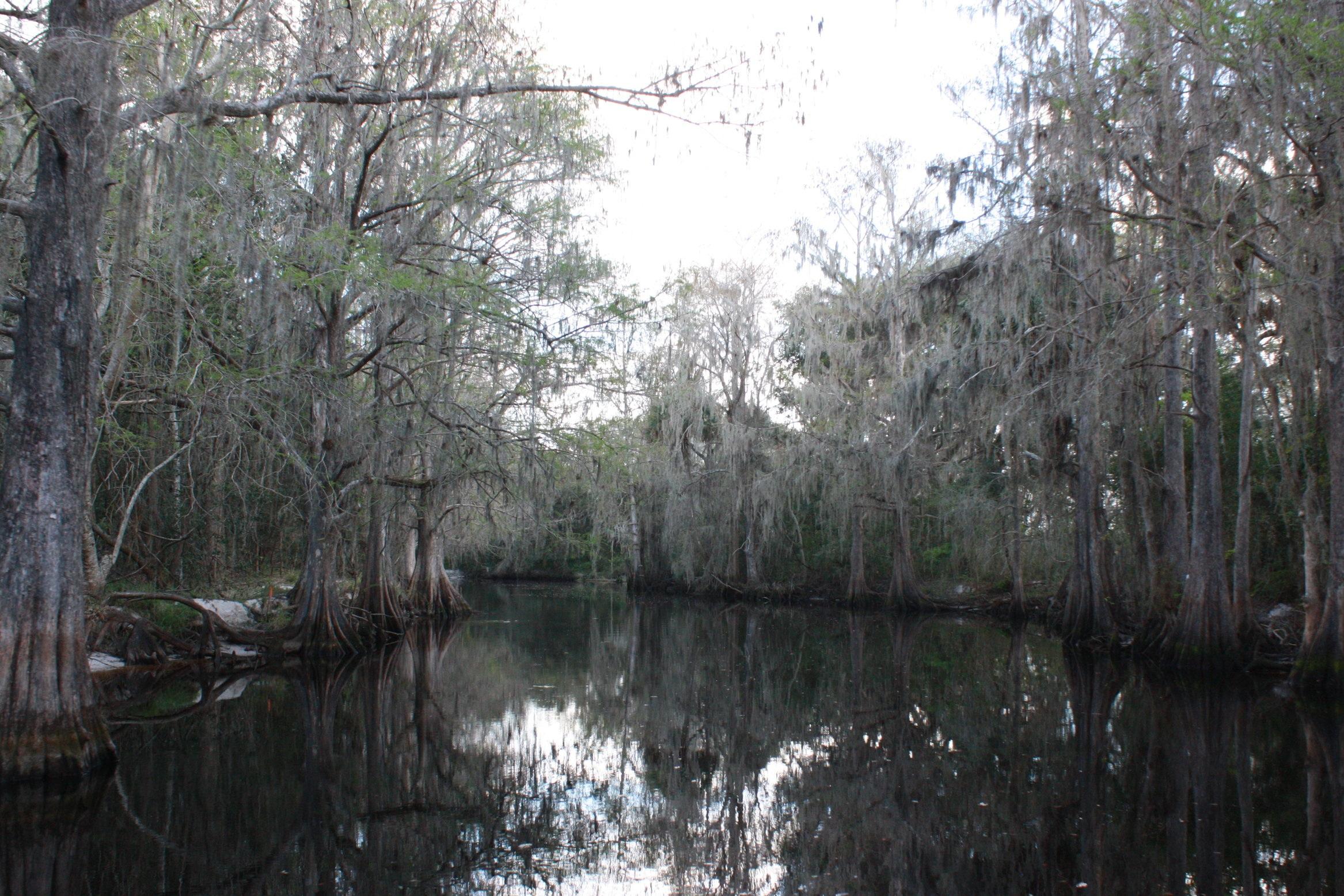 Shingle Creek (photo, (c) 2019 Christi Kapp