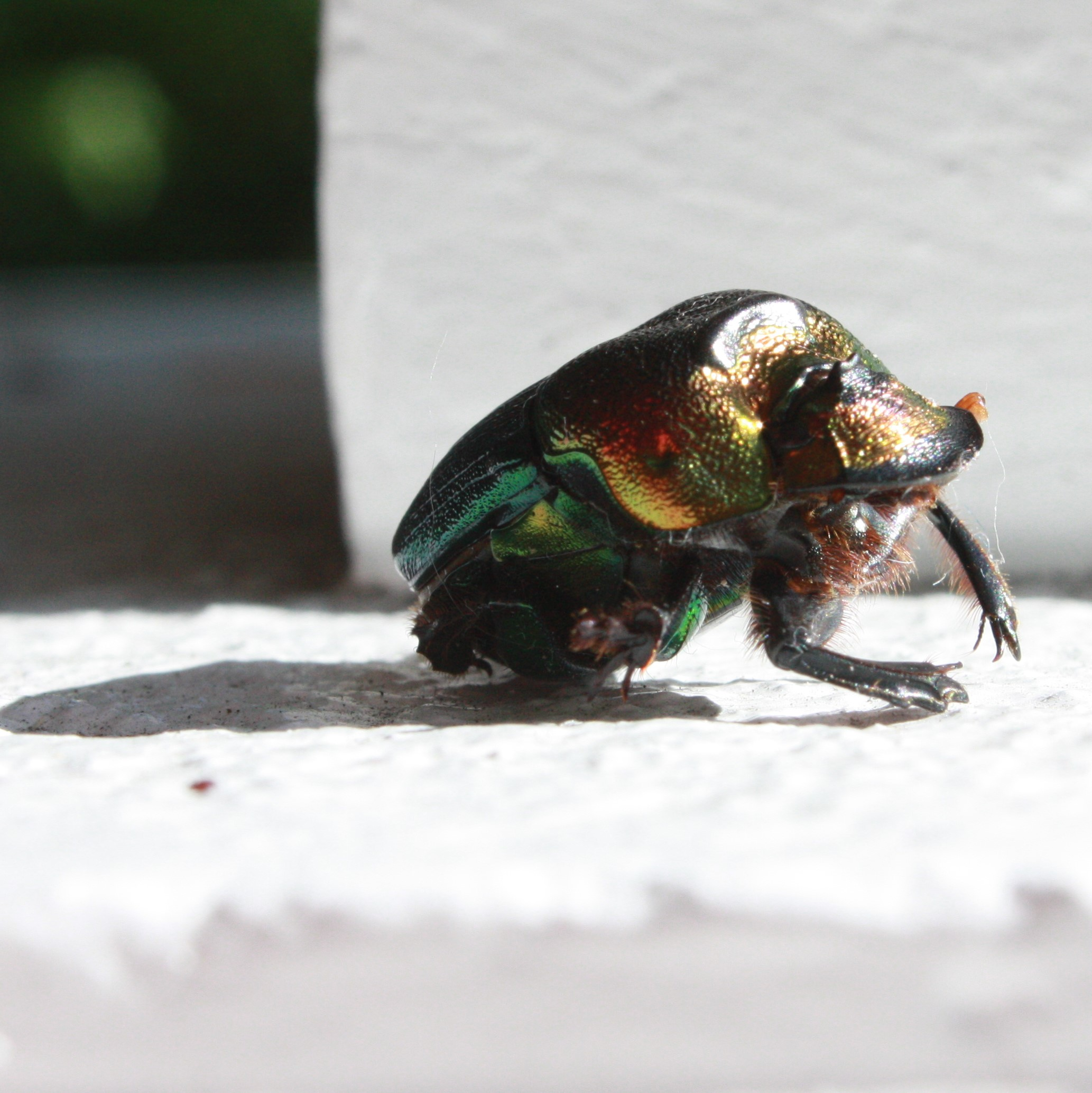 Rainbow Scarab - My Color Model