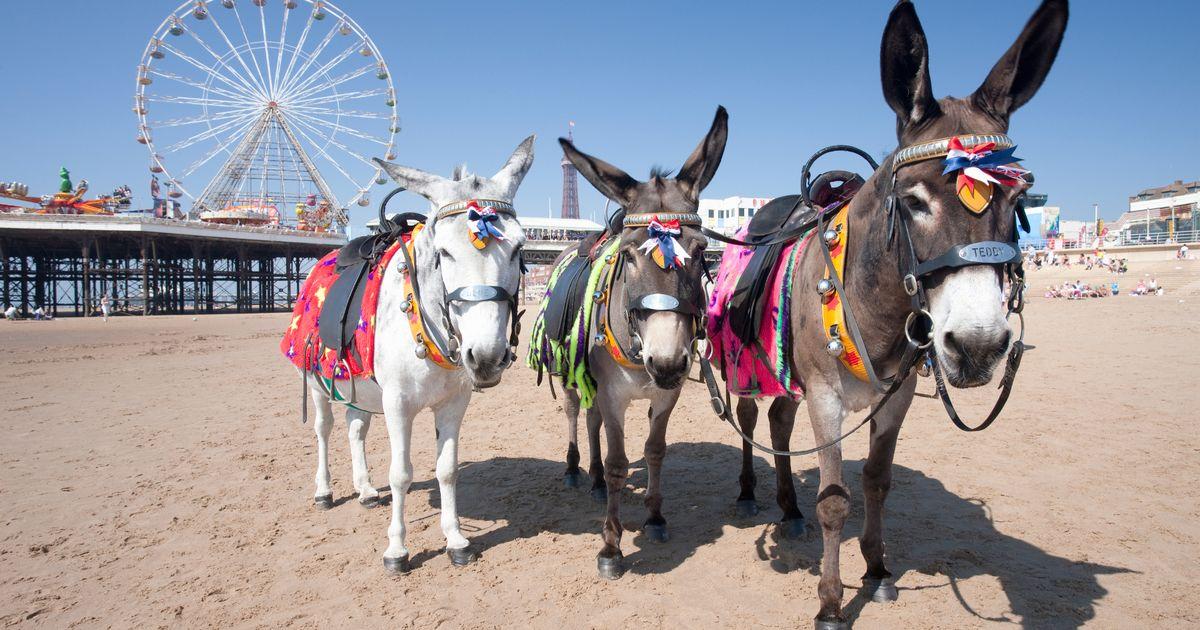 PROD-Donkeys-on-the-beach-near-Central-Pier-on-Blackpool-Beach-Blackpool-Lancashire-England-UK.jpg