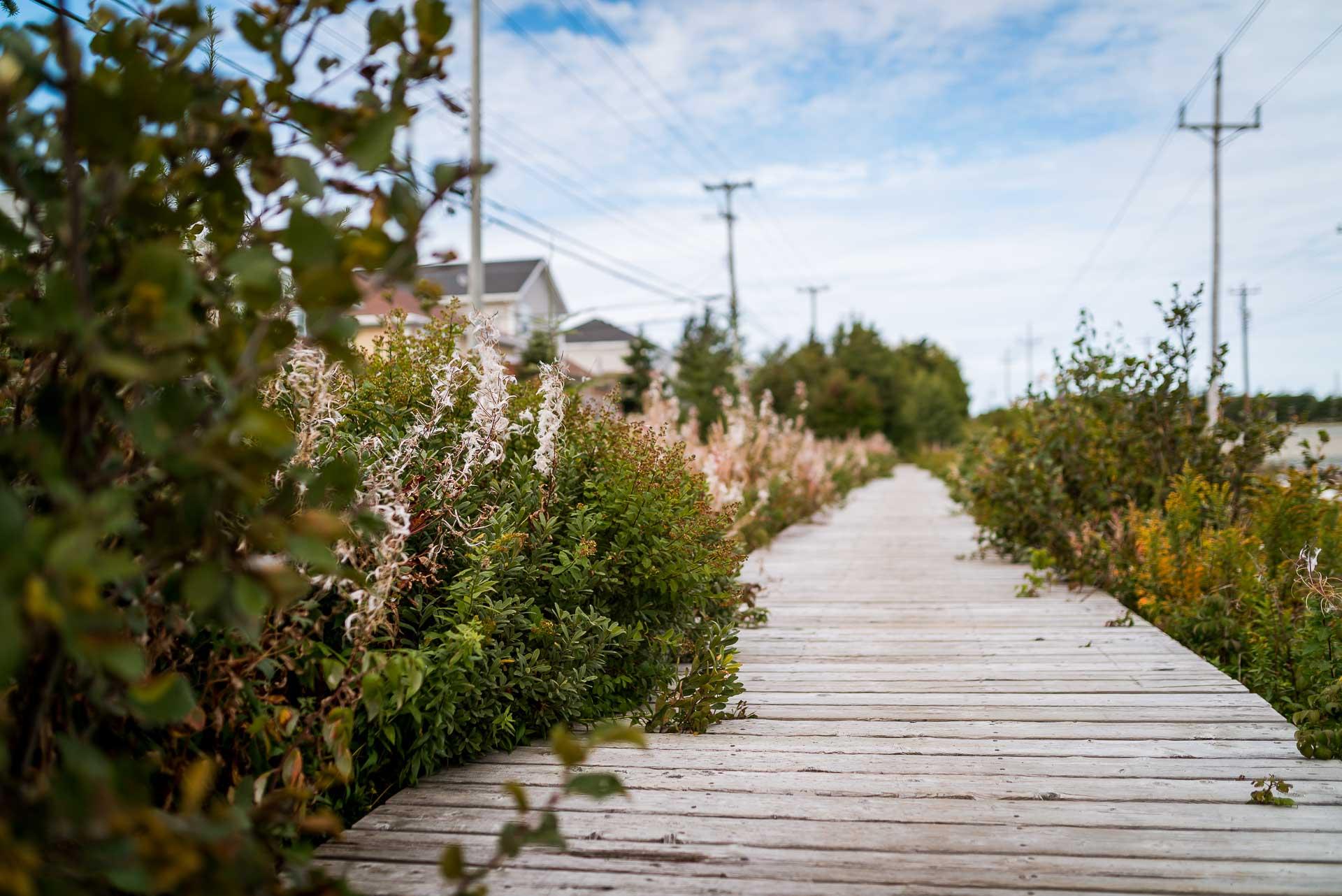 Clovelly Estates Walkway