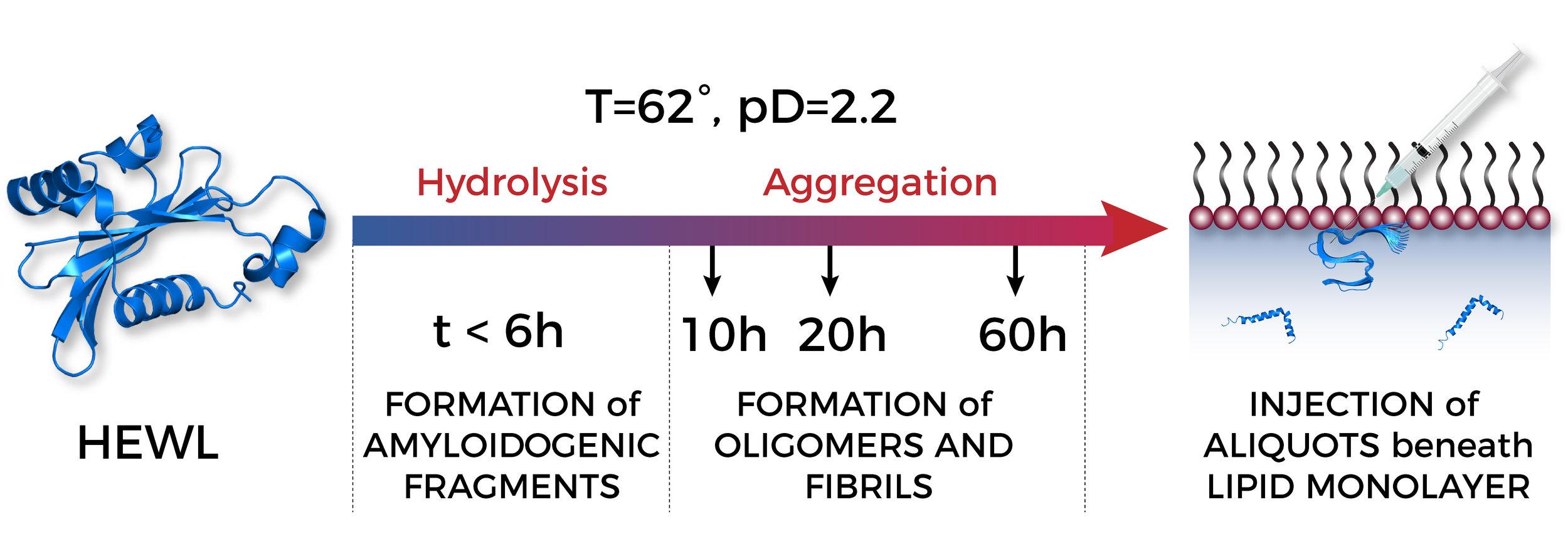 LysozymeSample2.jpg