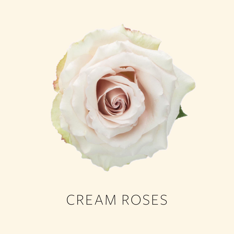 Cream Roses.jpg