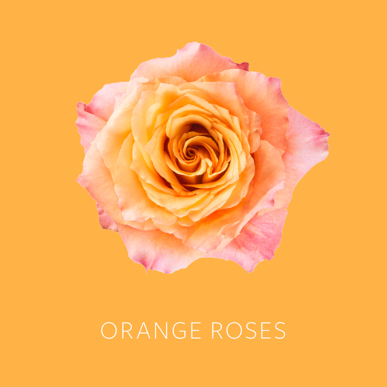 Orange Roses.jpg