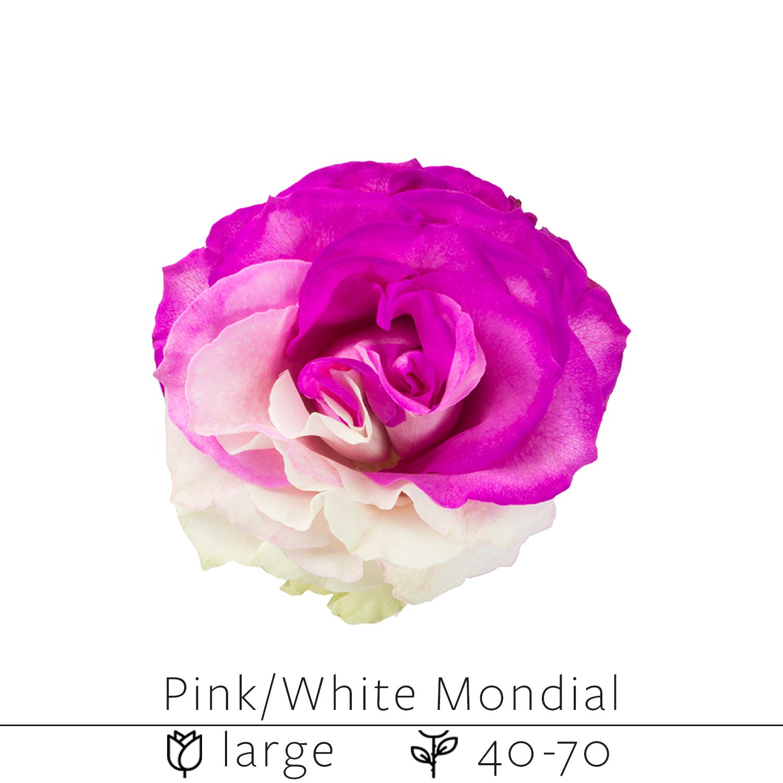 Pink White Mondial.jpg